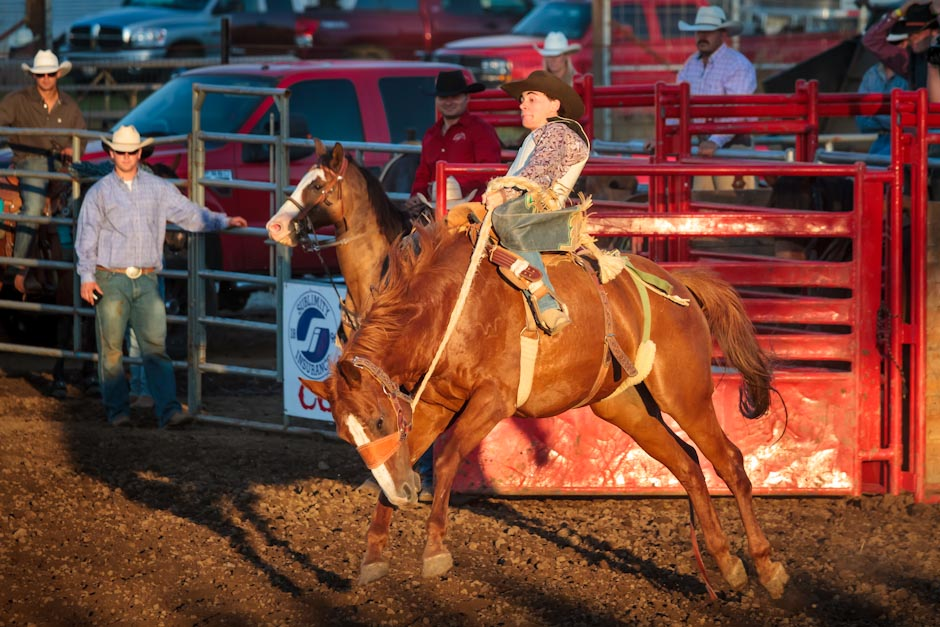 Saddle bonc rider at a rodeo holds on tight as his horse tries to buck him off
