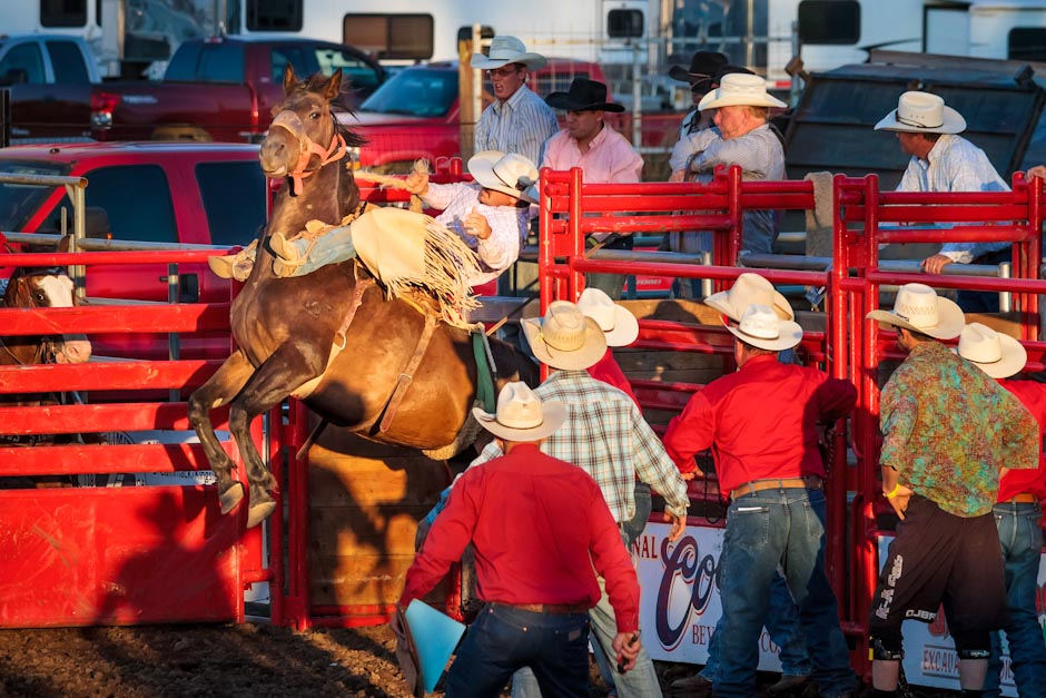 A saddle bronc rider at a rodeo holds on tight as his horse launches out of the chute