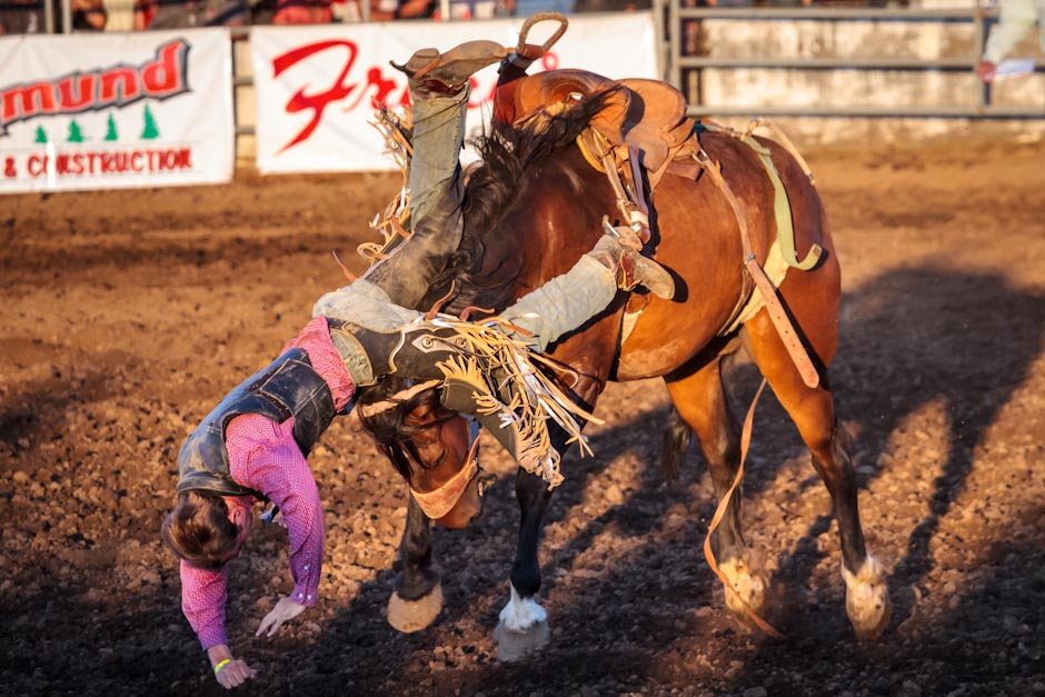 Saddle bronc rider at a rodeo gets thrown from his horse
